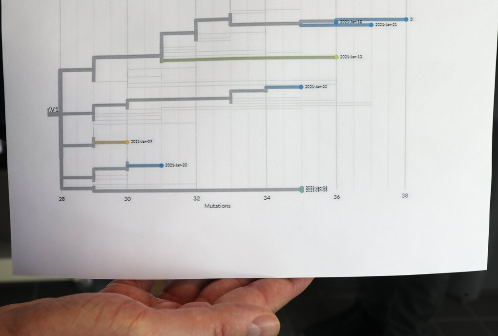 A researcher shows a dendrogram — a diagram that shows the hierarchical relationship between objects — of a variant of the coronavirus at the Washington Department of Health's Public Health Laboratories in Shoreline Tuesday. It tracks one of the coronavirus variants in four Washington counties during a month, and shows that this particular strain is not expanding in the population. (Ken Lambert / The Seattle Times)
