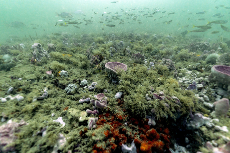 The Gray's Reef National Marine Sanctuary off the coast of Savannah, Georgia. Marine protected areas remain vulnerable to increases in sea temperatures, ocean acidity and pollution. More protections are needed. (David J. Phillip / AP, file)